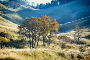 秋の砥峰高原の夕方の写真素材 [FYI01464791]