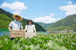 畑で木箱を持つ男女の写真素材 [FYI01464814]