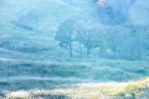 秋の砥峰高原の夕方の写真素材 [FYI01464830]