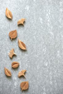 石板の上の木の葉っぱの写真素材 [FYI01464862]