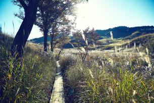 秋の砥峰高原の夕方の写真素材 [FYI01464916]