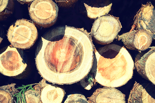 杉の丸太の写真素材 [FYI01464965]