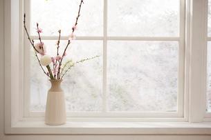 窓際に置かれた桃の花とピンポンマムの写真素材 [FYI01464974]