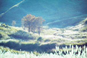 秋の砥峰高原の夕方の写真素材 [FYI01465055]