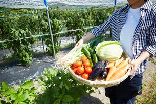 畑で野菜を盛ったカゴを持つ女性の手の写真素材 [FYI01465133]