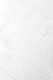スケルトンリーフのフレームの写真素材 [FYI01465183]