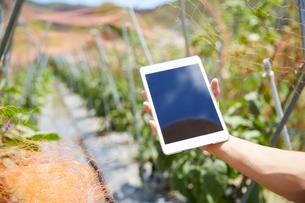 畑の前でタブレットを持つ男性の手の写真素材 [FYI01465232]