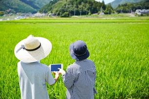 水田の前でタブレットを見る男女の後ろ姿の写真素材 [FYI01465689]