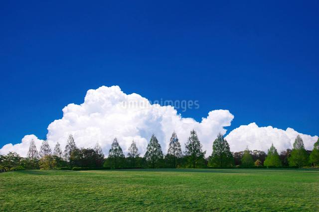 草原と青空と入道雲の写真素材 [FYI01466469]