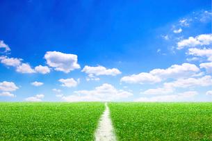 青空と草原と小道の写真素材 [FYI01466480]