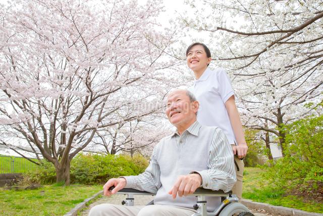 サクラ並木道で介護福祉士に車椅子を押してもらうシニア男性の写真素材 [FYI01467334]
