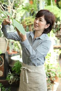グリーンショップで働くミドル女性の写真素材 [FYI01467372]