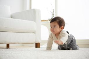 白で統一した部屋ではいはいをする赤ちゃんの写真素材 [FYI01467498]