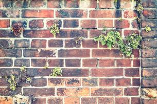 味のあるレンガ壁の写真素材 [FYI01467657]