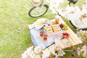 桜の木とピクニックご飯と自転車の写真素材 [FYI01468081]