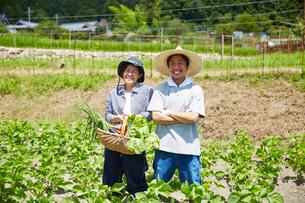 野菜を持って畑の中に立つ男女の写真素材 [FYI01469372]