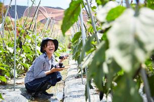 畑にしゃがみ込んでナスを収穫して笑う女性の写真素材 [FYI01469413]