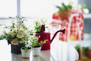 部屋の観葉植物と水差しの写真素材 [FYI01470869]