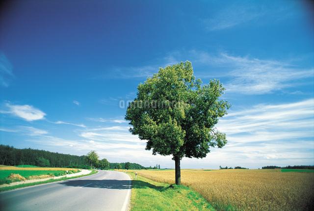草原の一本の木と道の写真素材 [FYI01470895]