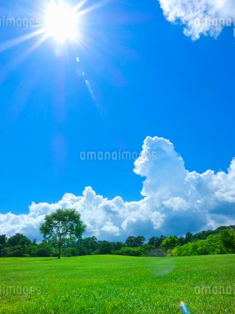 太陽と夏空に入道雲と芝生の緑の写真素材 [FYI01471049]