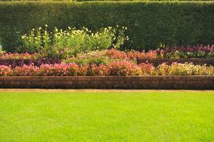 芝生と花壇と生垣の写真素材 [FYI01471319]