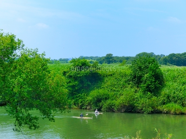 新緑の川でカヌーをする人の写真素材 [FYI01471333]