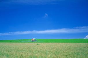 美瑛の畑の写真素材 [FYI01471387]