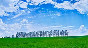 新緑の畑と青空に夏雲の写真素材 [FYI01471409]