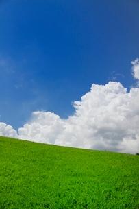 新緑の芝生と白い雲の写真素材 [FYI01471430]