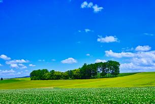 新緑の畑と青空に夏雲の写真素材 [FYI01471443]
