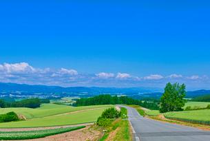 新緑の畑と青空の写真素材 [FYI01471453]
