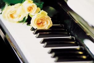 ピアノの鍵盤と白いバラの写真素材 [FYI01471561]