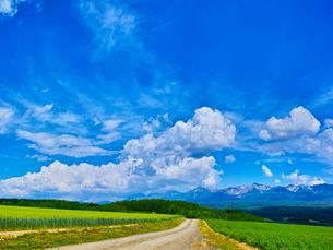 新緑の畑と青空に夏雲の写真素材 [FYI01471576]