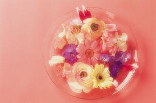 プレートに飾った春の花の写真素材 [FYI01471604]