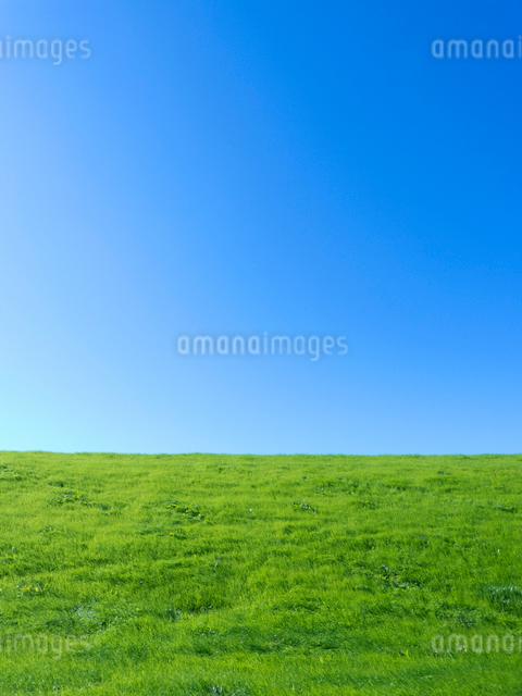 青空と緑の丘の写真素材 [FYI01471656]