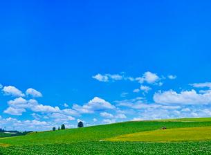 新緑の麦畑と青空に夏雲の写真素材 [FYI01471781]