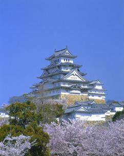 桜咲く姫路城の写真素材 [FYI01471796]