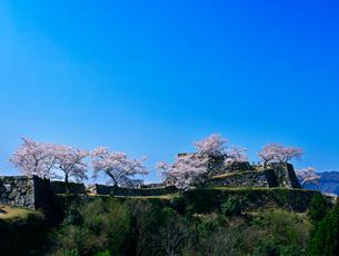 城跡の桜と青空の写真素材 [FYI01471816]