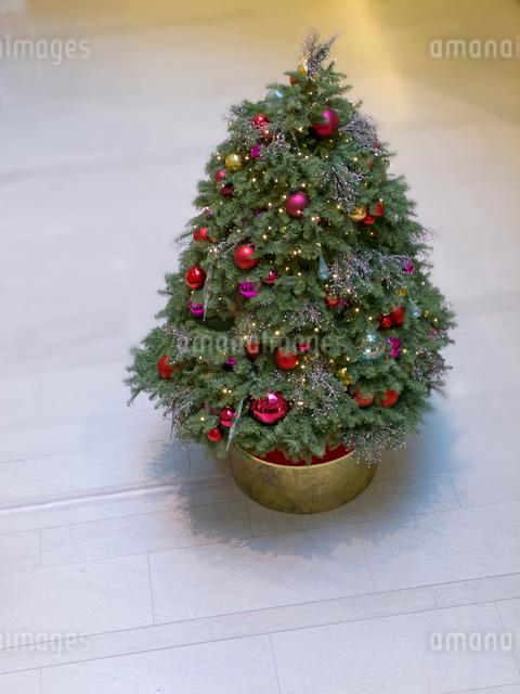 俯瞰のクリスマスツリーの写真素材 [FYI01471948]