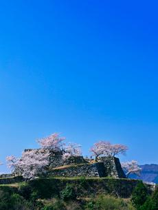城跡の桜と青空の写真素材 [FYI01471976]