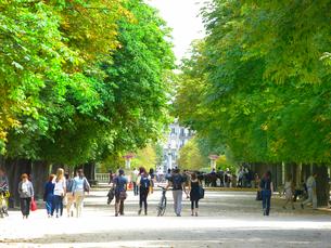 並木道を散歩している人々の写真素材 [FYI01472042]
