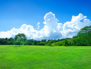 夏空に入道雲と芝生の緑の写真素材 [FYI01472147]