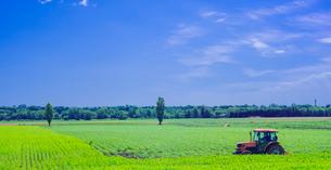 北海道 自然 風景 十勝平野   広大な畑 青空と雲の写真素材 [FYI01472222]