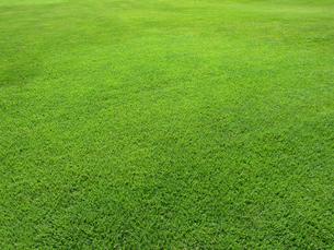 緑の芝生の写真素材 [FYI01472251]