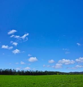 新緑の草原に浮かぶ夏雲の写真素材 [FYI01472340]