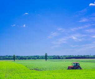北海道 自然 風景 十勝平野   広大な畑 青空と雲の写真素材 [FYI01472358]