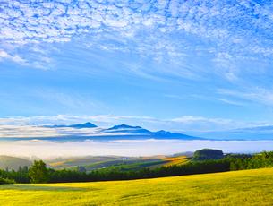 麦秋の畑と雲海に浮かぶ十勝岳連峰の写真素材 [FYI01472379]