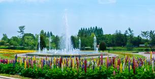 ルピナス (昇り藤)と噴水の写真素材 [FYI01472427]