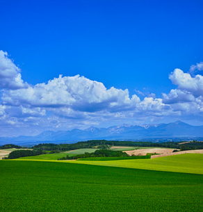 新緑の麦畑と十勝岳連山遠望の写真素材 [FYI01472463]