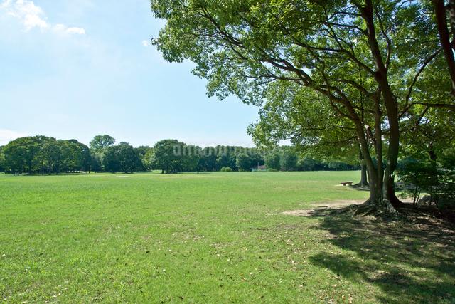 青空と雲と公園の緑の写真素材 [FYI01472487]